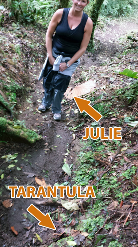 Image of Julie and Tarantula