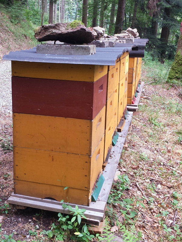 Image of Black Forrest Apiary